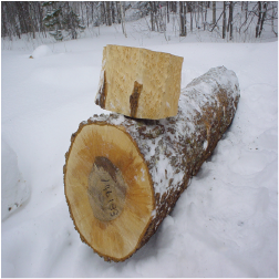 ELBirdseye Maple Logs 3