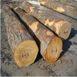 ELBlack Birch Logs 1