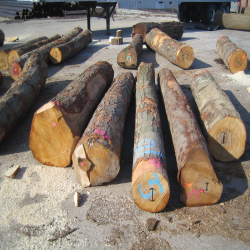 ELBlack Birch Logs 2
