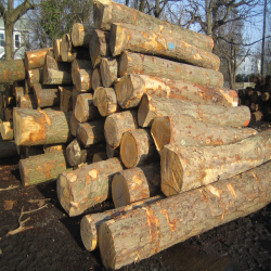 ELBlack Birch Logs 3