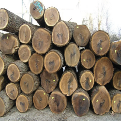 ELBlack Walnut Veneer Logs 2