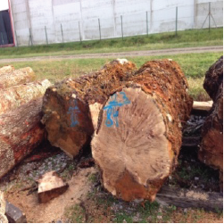 ELEuropean Poplar Figured Logs 2