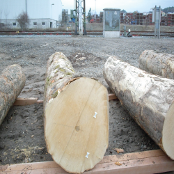 ELEuropean Sycamore Figured Logs 1
