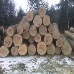 ELRed Oak Veneer Logs 1