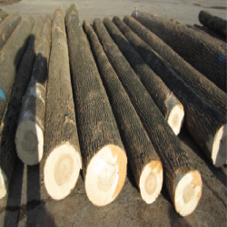 ELWhite Ash Saw Logs 1