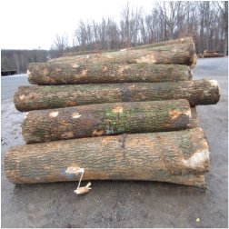 ELWhite Ash Saw Logs 3